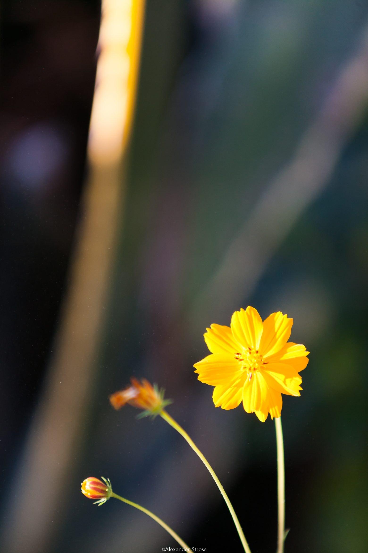 Flower Boken-00001