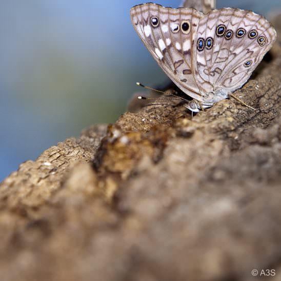 Macro Moth