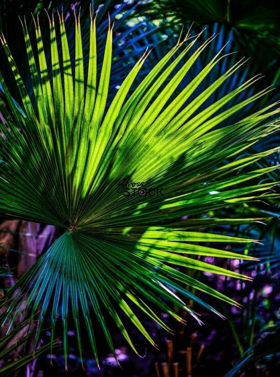 Fan Palm at the Botanical Garden
